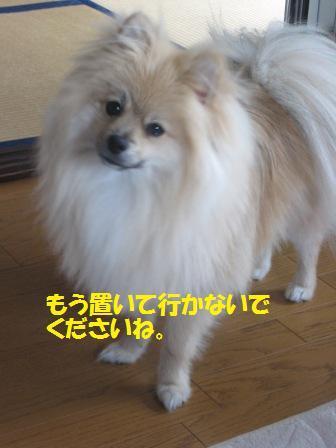 20150722_11.jpg