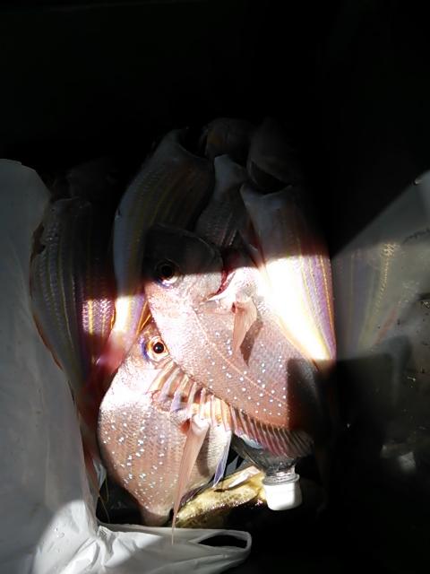 鯛ラバ10