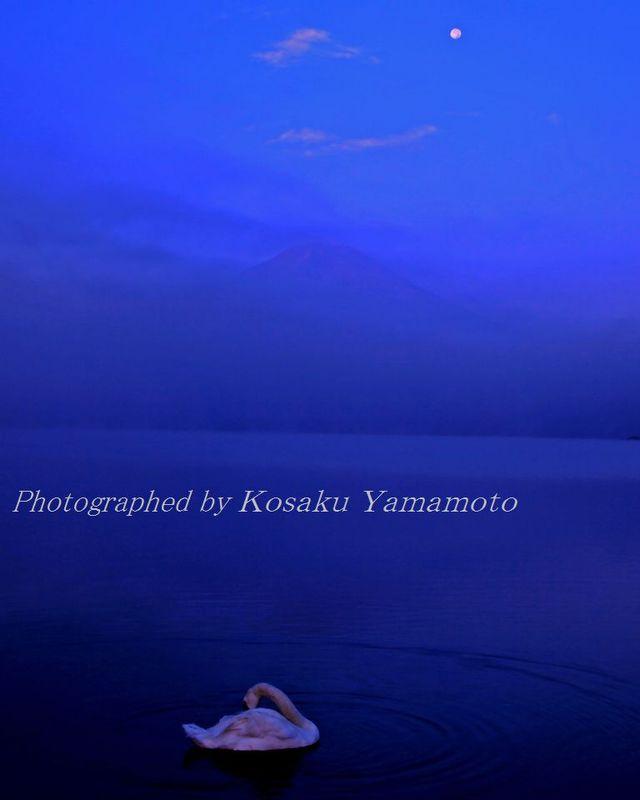 「残月富士に白鳥憩う」 (山中湖)