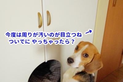 犬部屋DIY 4