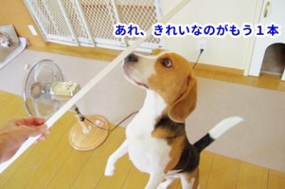 犬部屋DIY 3