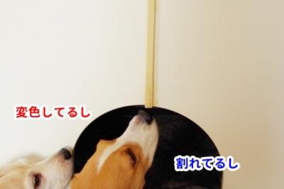 犬部屋DIY 2