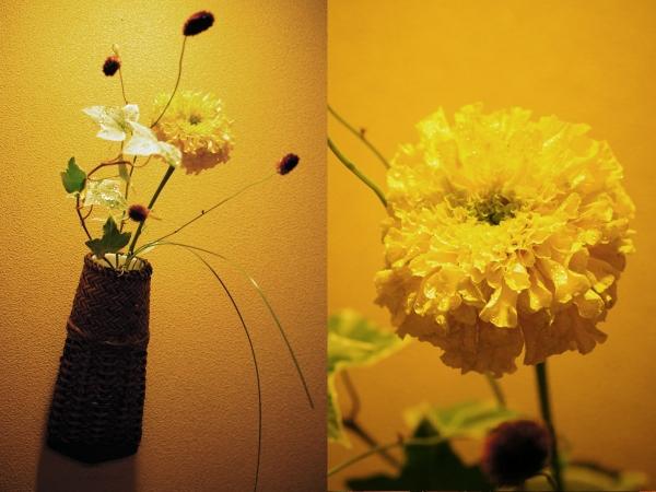 7月の花1