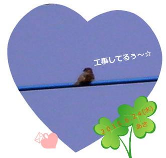 花ブ20150624-1