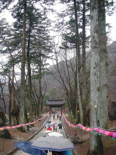海印寺の参道