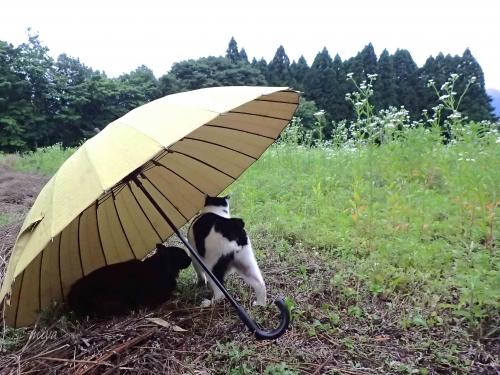 雨宿りチロmネP6100461 -2