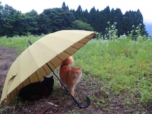 雨宿りちゃーmネP6100459 -2