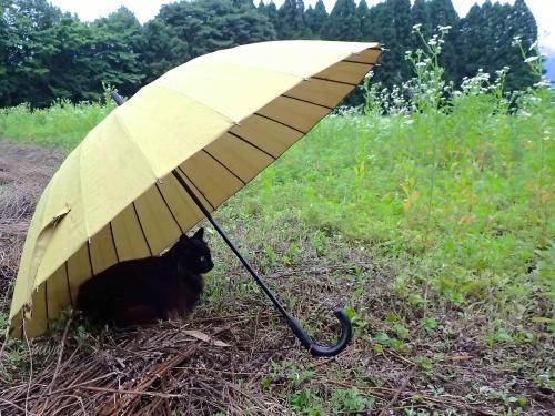 雨宿りクロmネP6100460 -2