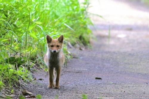 子狐散歩道mネ995A0880 -2