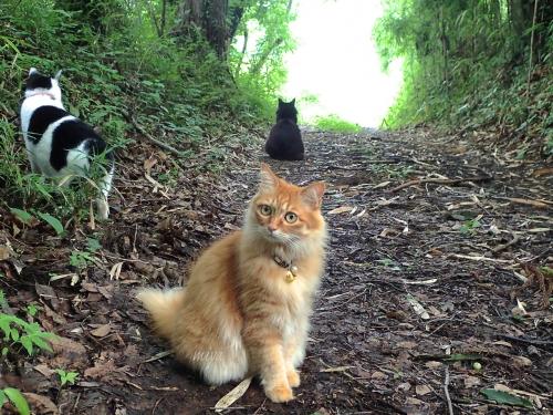猫3びっくりmネP6230284 -2