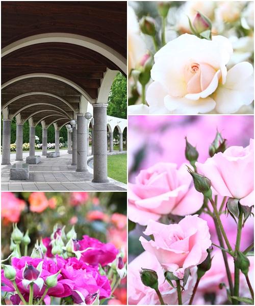 それぞれのバラ