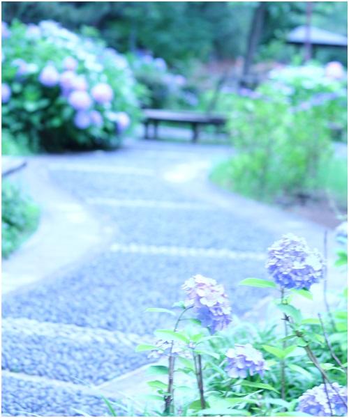 夙川の小道