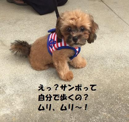 20150721さんぽ