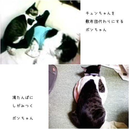 cats1_201508042043108e9.jpg