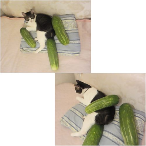 cats_20150801215530f59.jpg