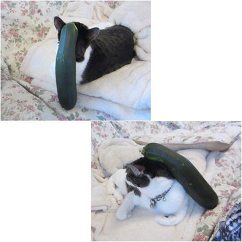cats_2015080220410555c.jpg