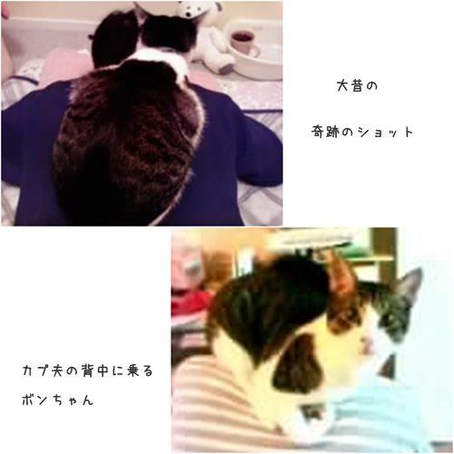 cats_201508042043084a2.jpg