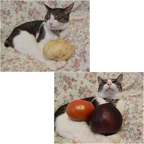 cats_20150808170534ffd.jpg