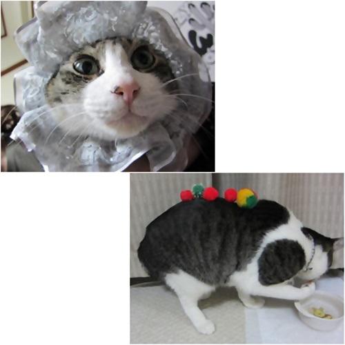 cats_20150808181036479.jpg