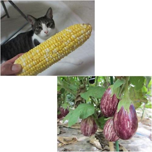 cats_20150808204313968.jpg