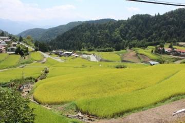 平林地区の棚田(富士川町)