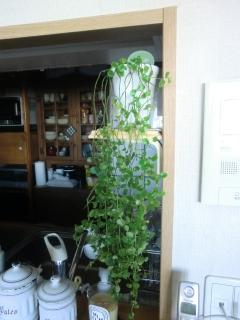 棚と観葉植物