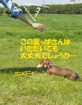 2015042702.jpg