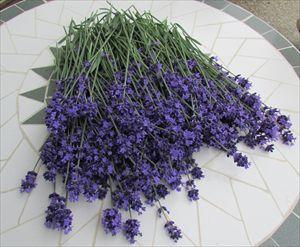 初摘み濃紫早咲 (3)_R