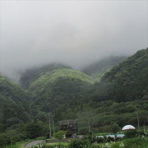 池田山の自然・花束 004_R