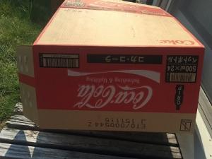 150801_メダカ稚魚④