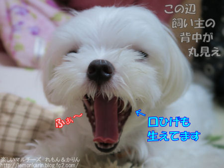 20150730_3.jpg