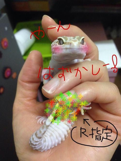 20150706213133f1d.jpg
