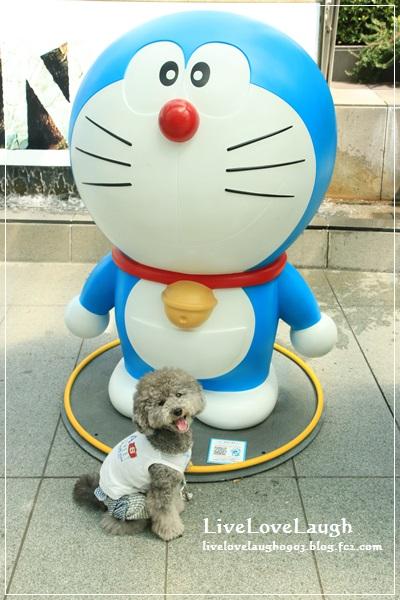 IMG_2667どら5