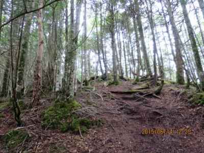苔むした登山道(自然林)