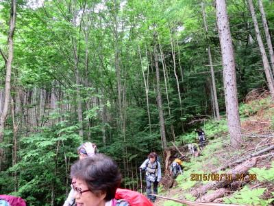原生林を抜ける