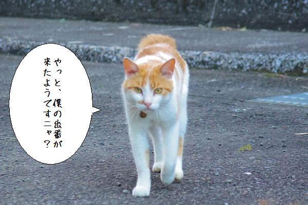 日南ダム11