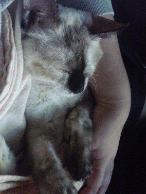 抱っこひもで寝んねタヌさん