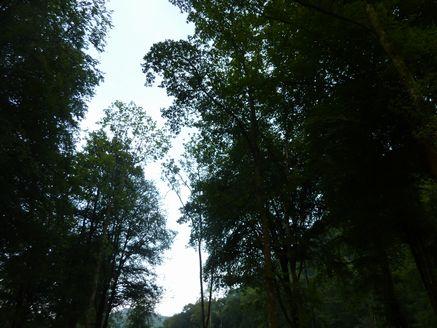 深いフランスの森