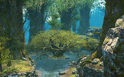 長老の木のもとへ
