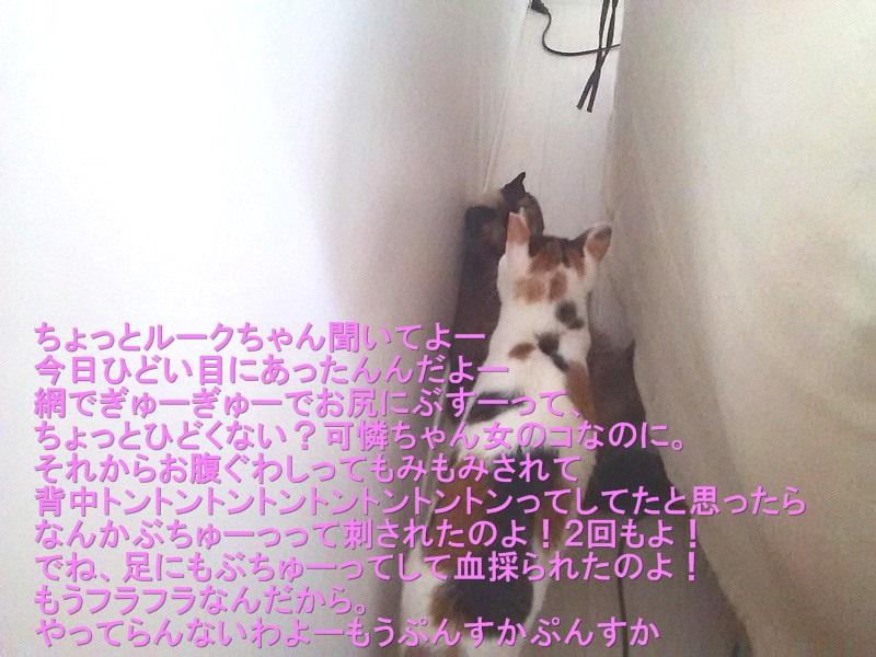 201508-DSC_0519.jpg