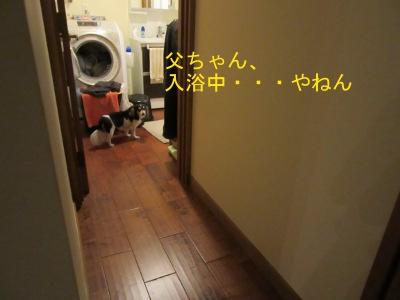 IMG_7452a.jpg
