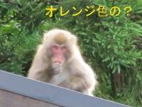 IMG_7646a.jpg