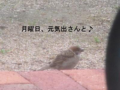 IMG_7895a.jpg