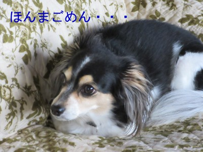 IMG_7966a.jpg