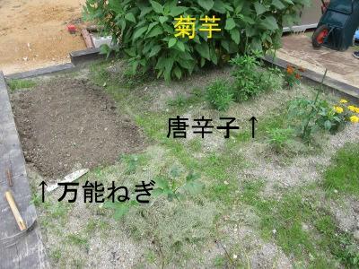 IMG_8081a.jpg