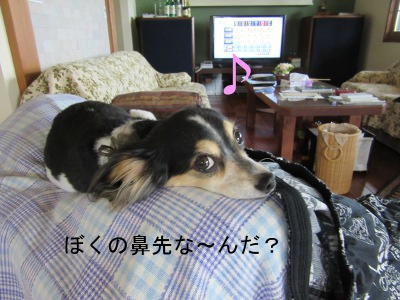 IMG_8363a.jpg