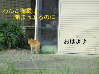 IMG_8634a.jpg