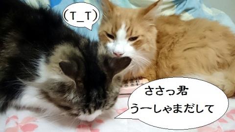 メッシュちゃん&しぃーちゃん