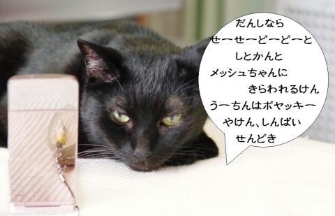 きなっちゃん社長