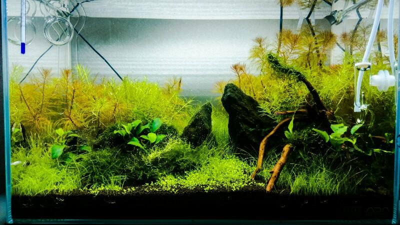 45cm水槽 水草水槽